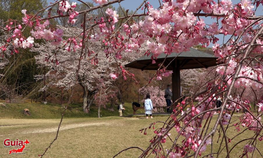 Parque Sakura Suigen - Toyota 18