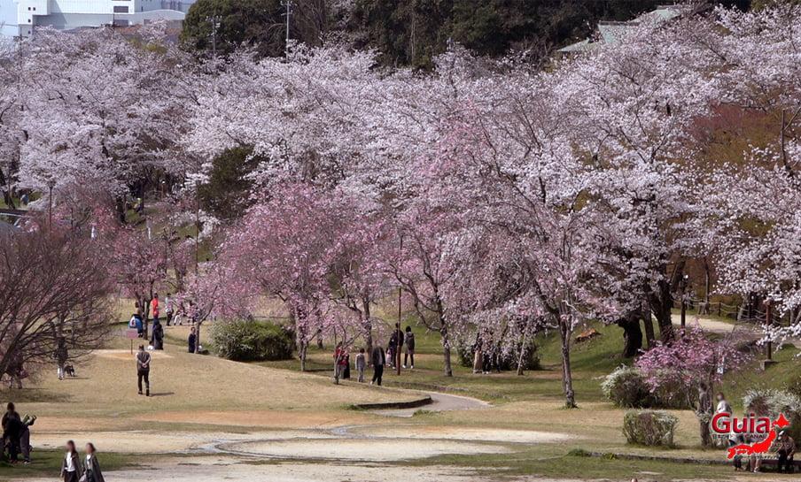 Parque Sakura Suigen - Toyota 20