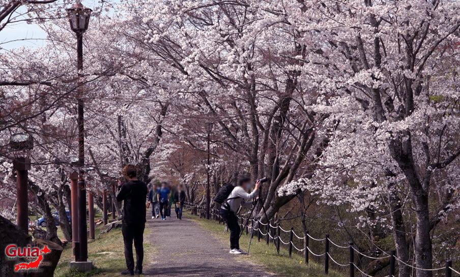 Parque Sakura Suigen - Toyota 25