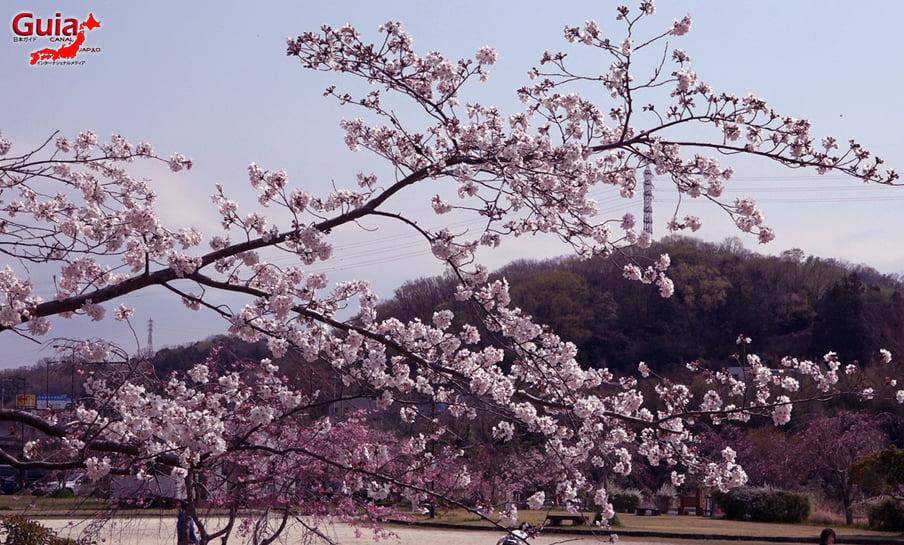 Parque Sakura Suigen - Toyota 26