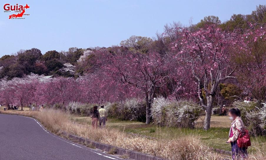 Parque Sakura Suigen - Toyota 27