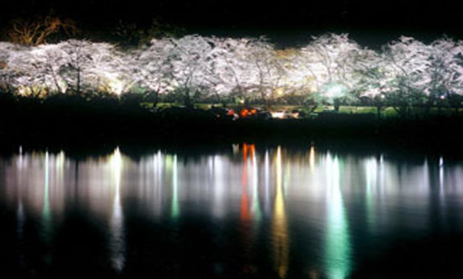 Parque Sakura Suigen - Toyota 30
