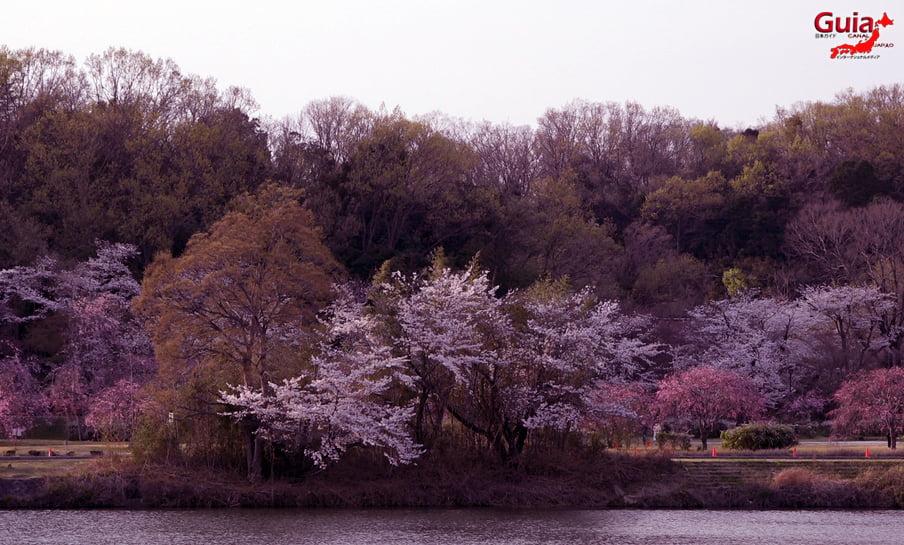 Parque Sakura Suigen - Toyota 4