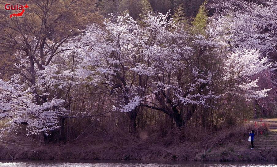 Parque Sakura Suigen - Toyota 5