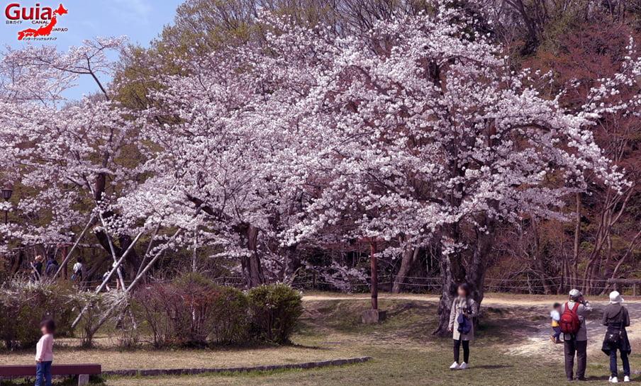 Parque Sakura Suigen - Toyota 9