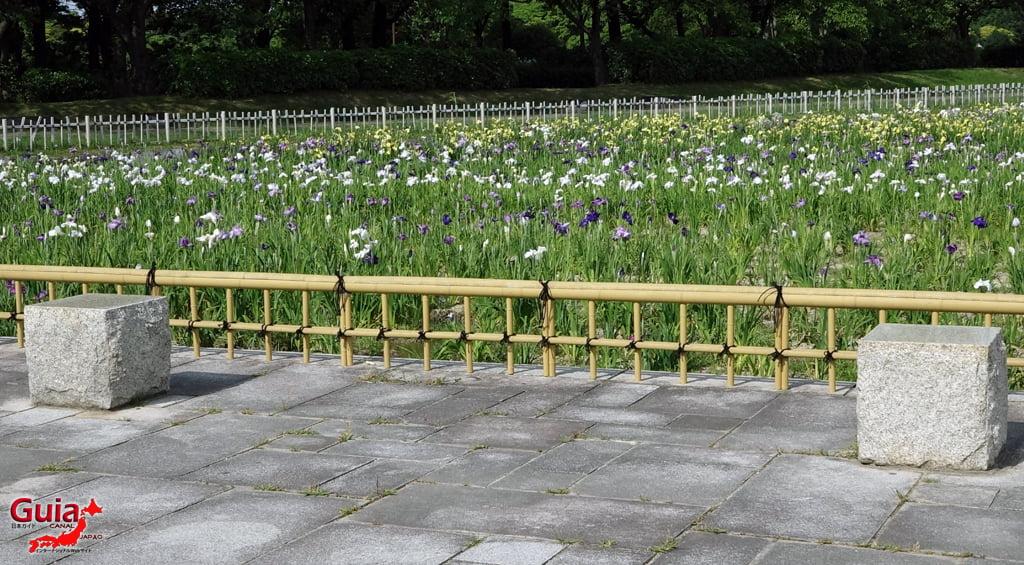Iris Festival Shonai Ryokuchi Nagoya 11