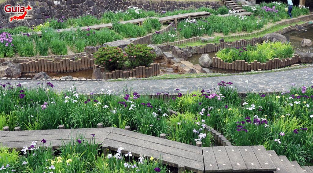 Iris Festival - Toyokawa Akatsukayama Park 6