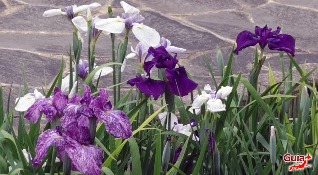 Iris наадам - Toyokawa Akatsukayama Park 7