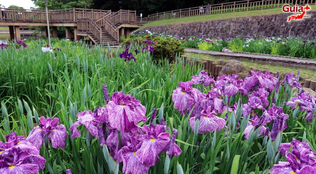 Iris наадам - Toyokawa Akatsukayama Park 8