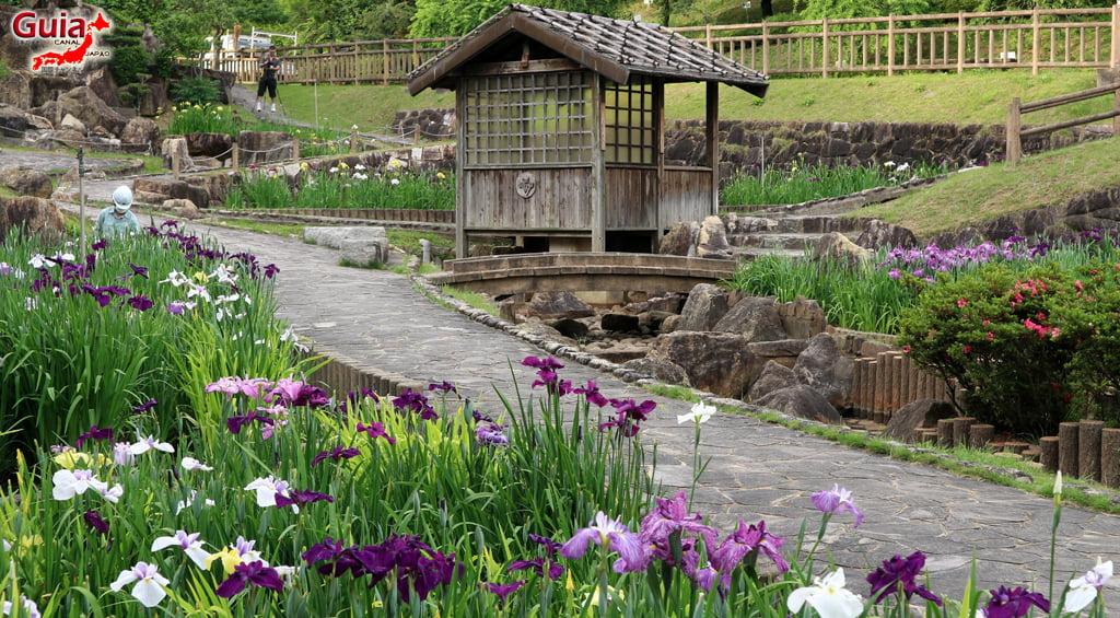 Iris Festival - Toyokawa Akatsukayama Park 10