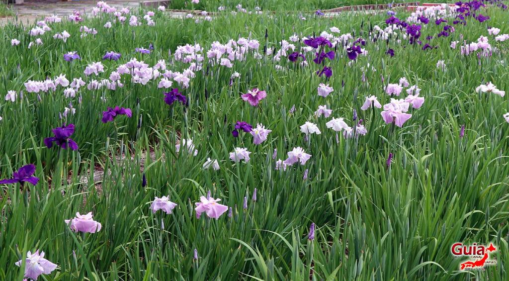 Iris Hekinan наадам 4