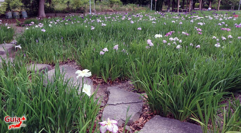 Iris Hekinan наадам 6