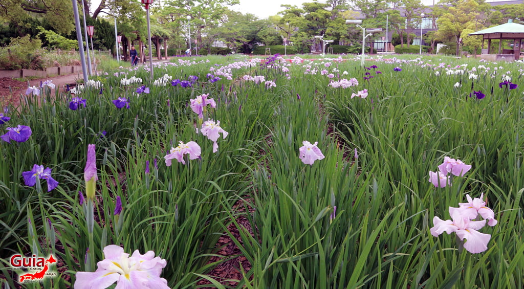 Iris Hekinan наадам 8