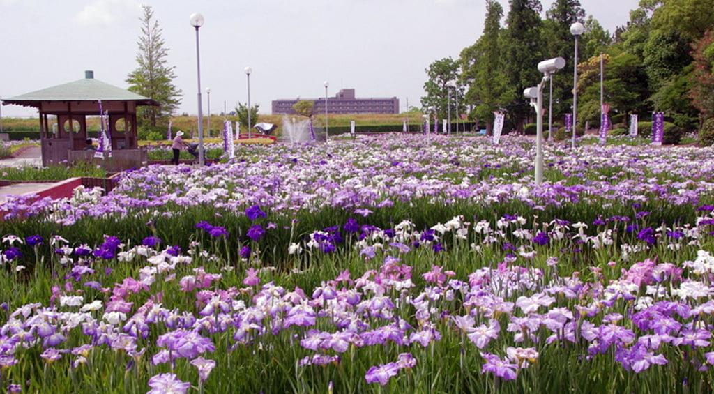 Iris Hekinan наадам 10
