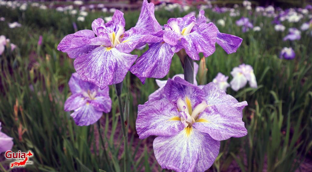 Iris Hekinan наадам 11