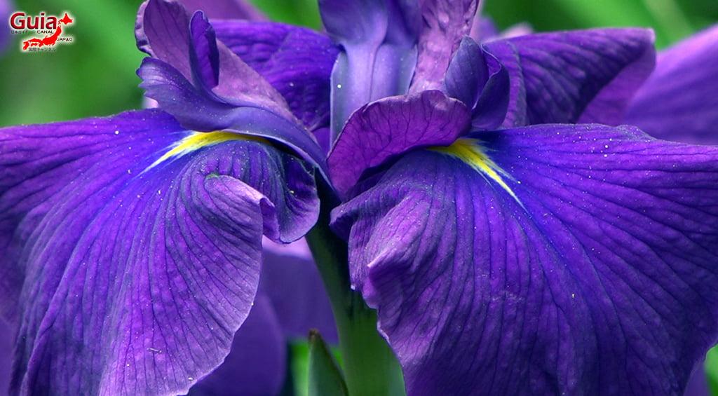Iris Hekinan наадам 12