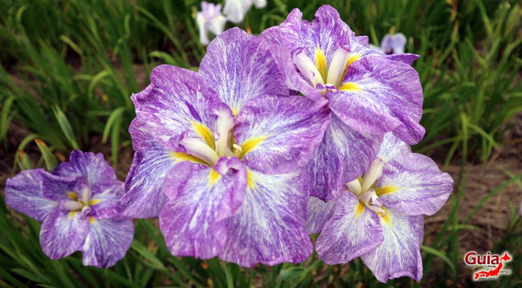 Iris Hekinan наадам 13