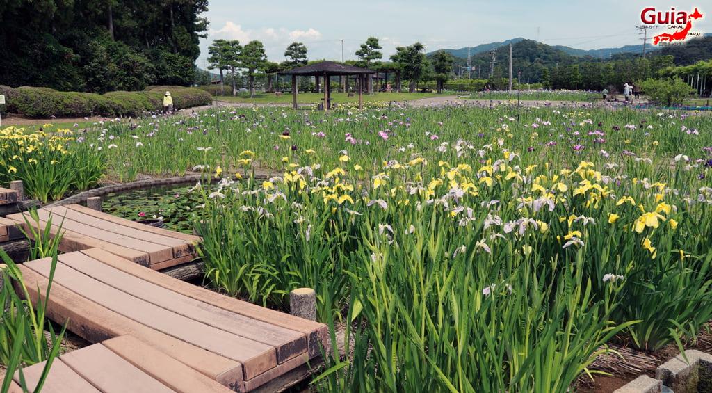 Цэцэрлэгийн Iris Kamo Hana-Shobu Toyohashi 3