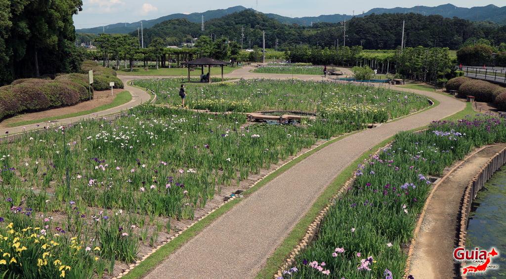 Цэцэрлэгийн Iris Kamo Hana-Shobu Toyohashi 5