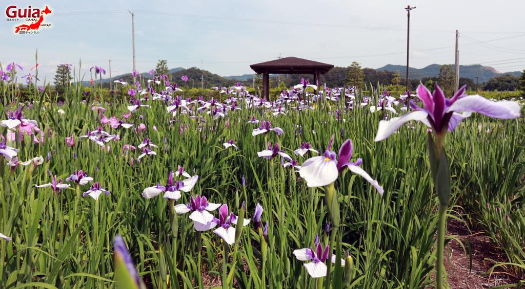 Garden Iris Kamo Hana-Shobu Toyohashi 9