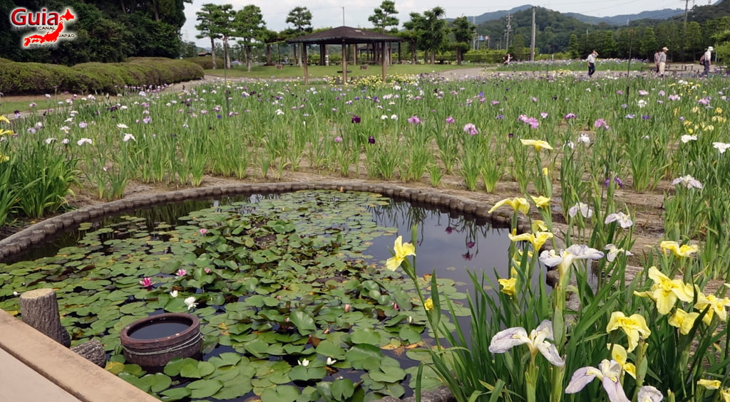 Цэцэрлэгийн Iris Kamo Hana-Shobu Toyohashi 12