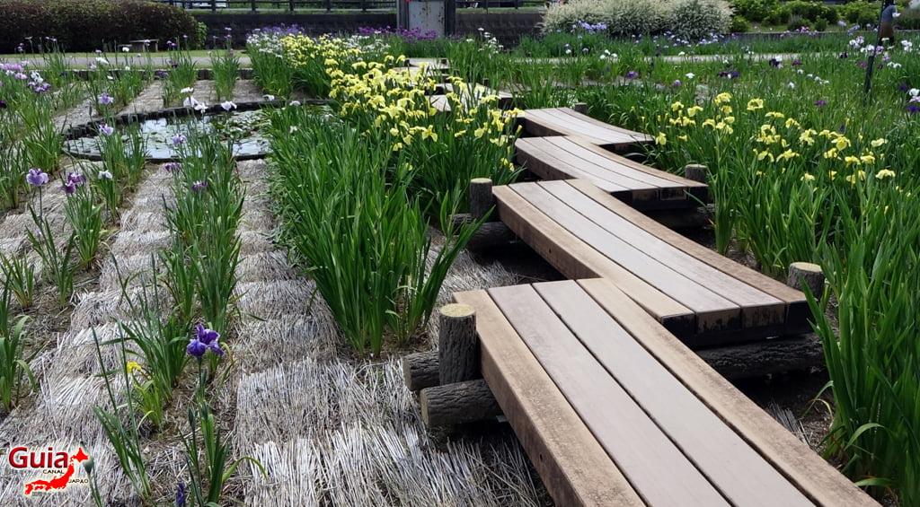 Garden Iris Kamo Hana-Shobu Toyohashi 13