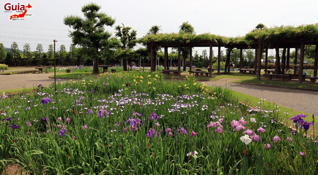 Цэцэрлэгийн Iris Kamo Hana-Shobu Toyohashi 14