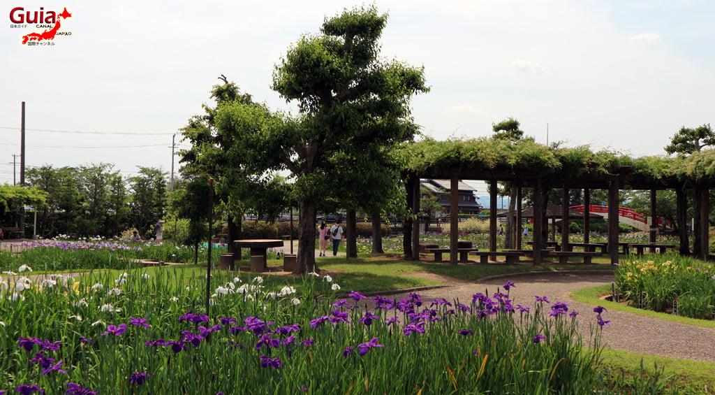 Цэцэрлэгийн Iris Kamo Hana-Shobu Toyohashi 15