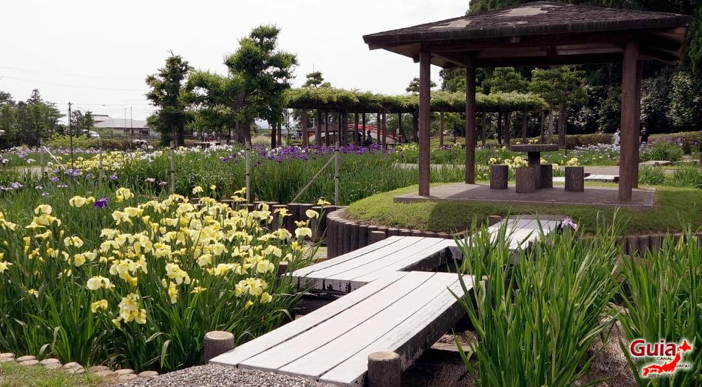 Garden Iris Kamo Hana-Shobu Toyohashi 16