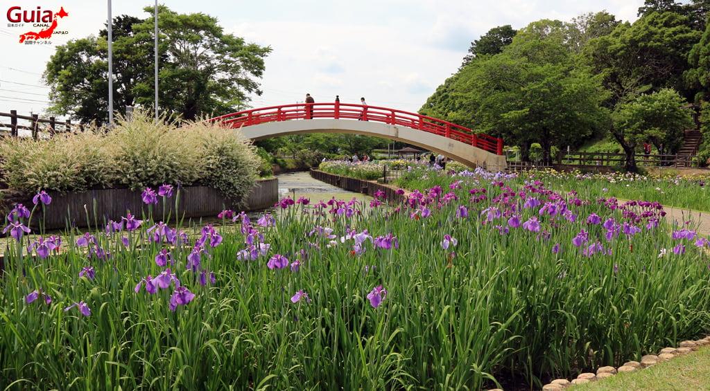 Цэцэрлэгийн Iris Kamo Hana-Shobu Toyohashi 18