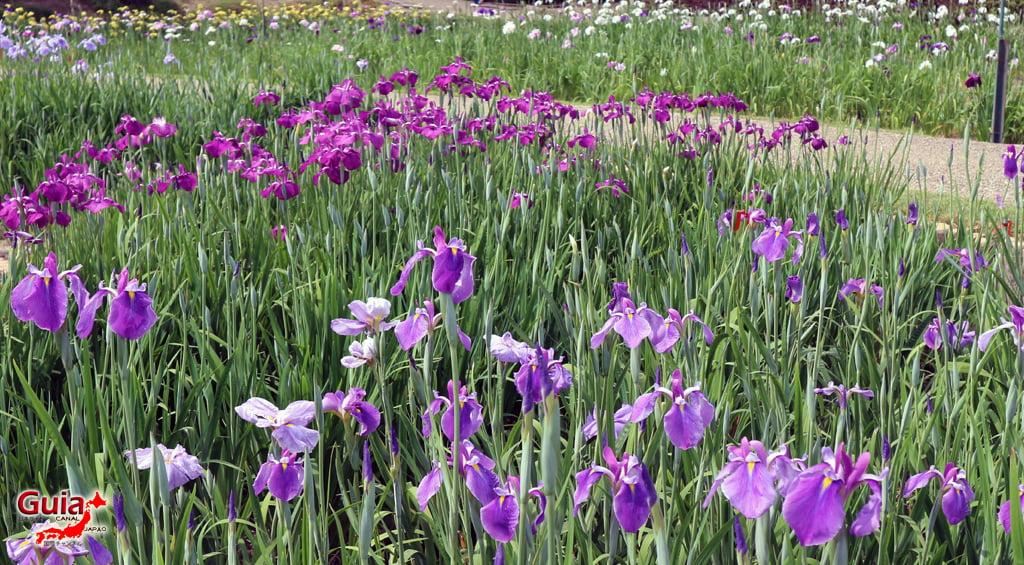 Цэцэрлэгийн Iris Kamo Hana-Shobu Toyohashi 20