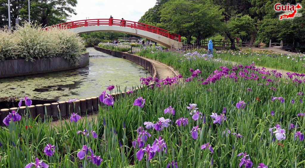 Цэцэрлэгийн Iris Kamo Hana-Shobu Toyohashi 22