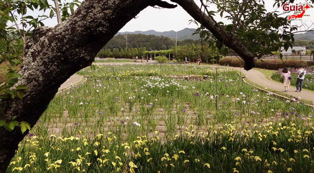 Garden Iris Kamo Hana-Shobu Toyohashi 22