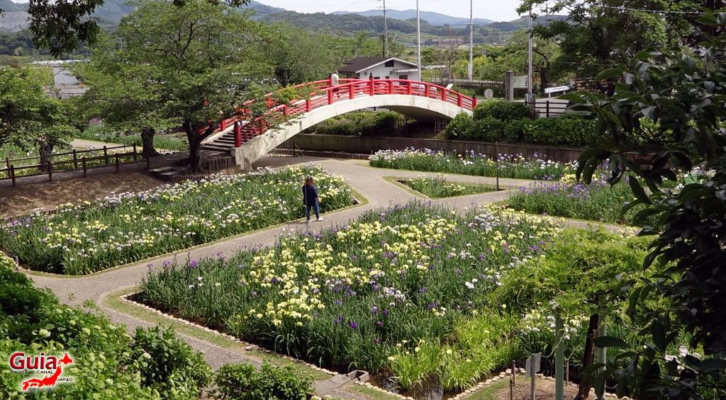 Цэцэрлэгийн Iris Kamo Hana-Shobu Toyohashi 26