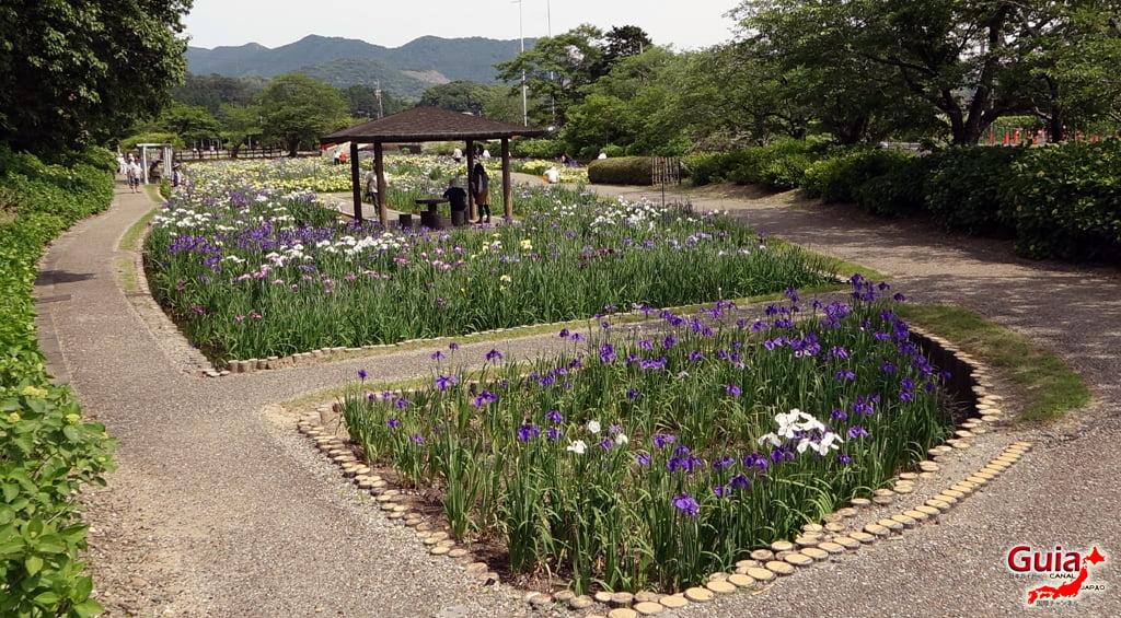 Цэцэрлэгийн Iris Kamo Hana-Shobu Toyohashi 25
