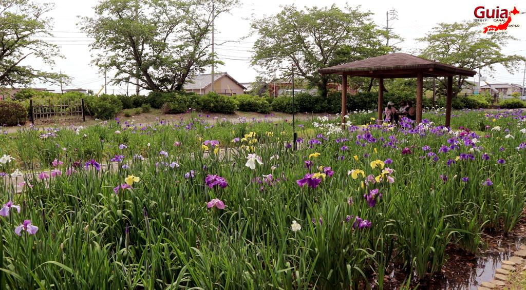 Цэцэрлэгийн Iris Kamo Hana-Shobu Toyohashi 27