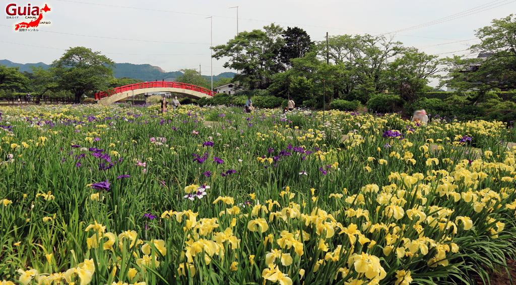 Цэцэрлэгийн Iris Kamo Hana-Shobu Toyohashi 31