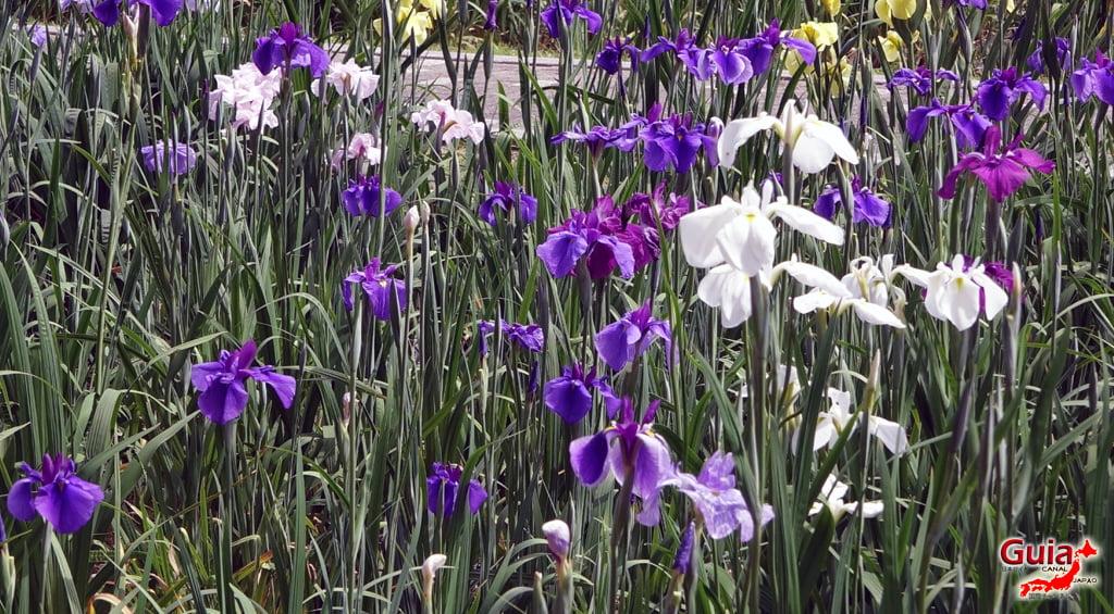Garden Iris Kamo Hana-Shobu Toyohashi 33