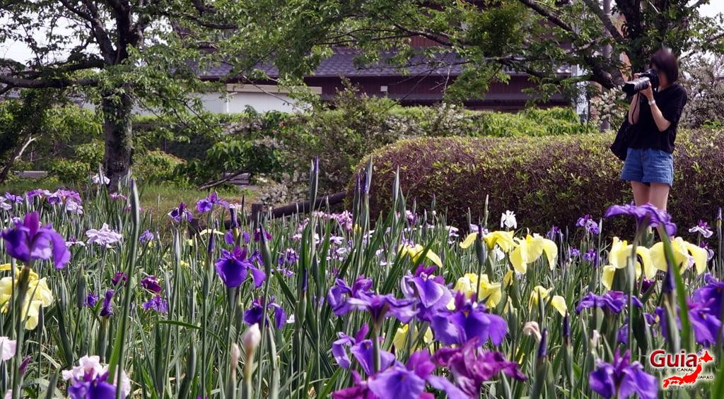 Цэцэрлэгийн Iris Kamo Hana-Shobu Toyohashi 33