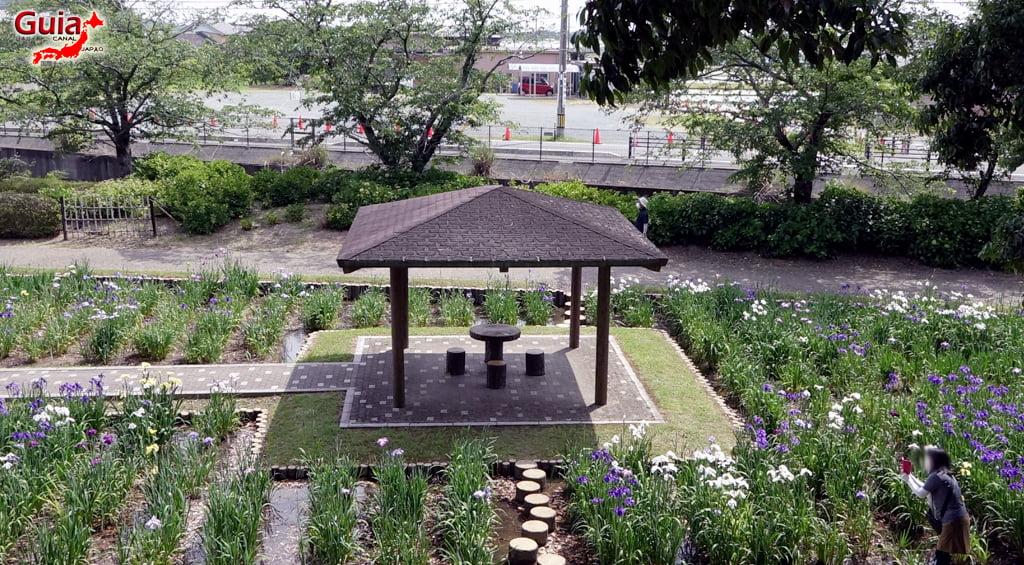 Цэцэрлэгийн Iris Kamo Hana-Shobu Toyohashi 38