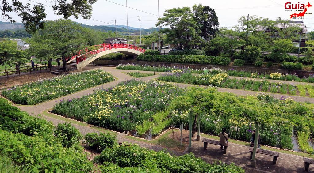 Garden Iris Kamo Hana-Shobu Toyohashi 38