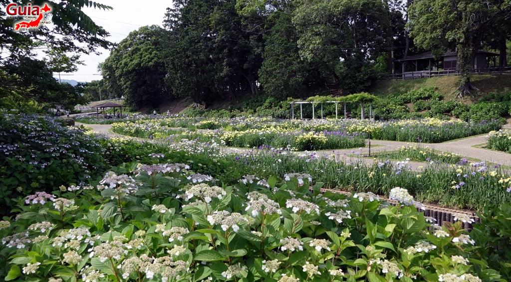 Garden Iris Kamo Hana-Shobu Toyohashi 39