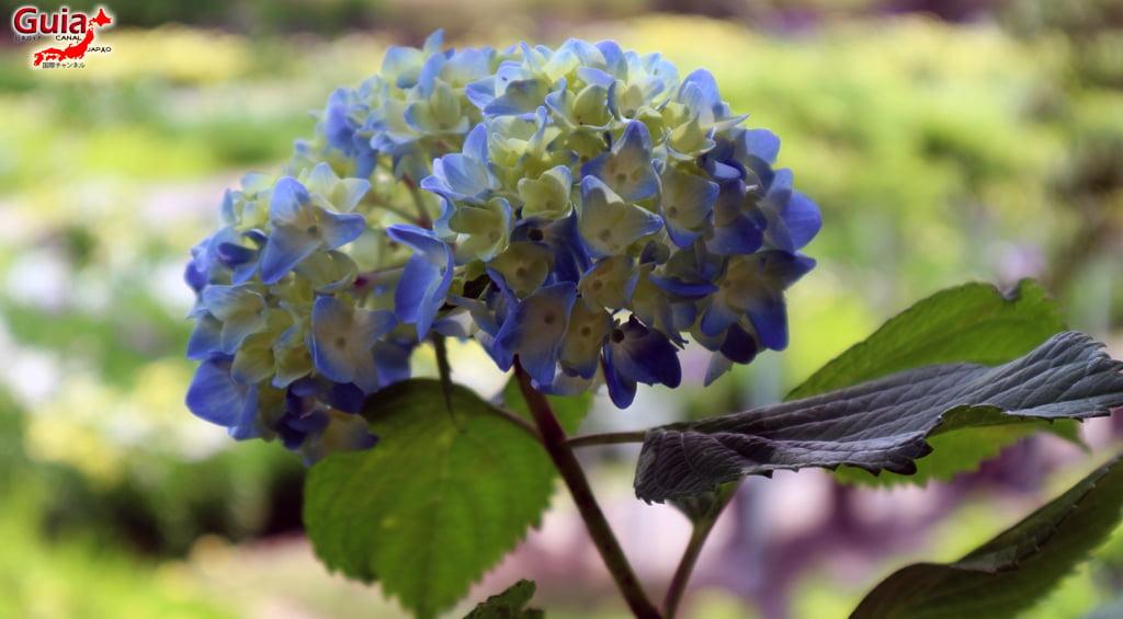 Цэцэрлэгийн Iris Kamo Hana-Shobu Toyohashi 40