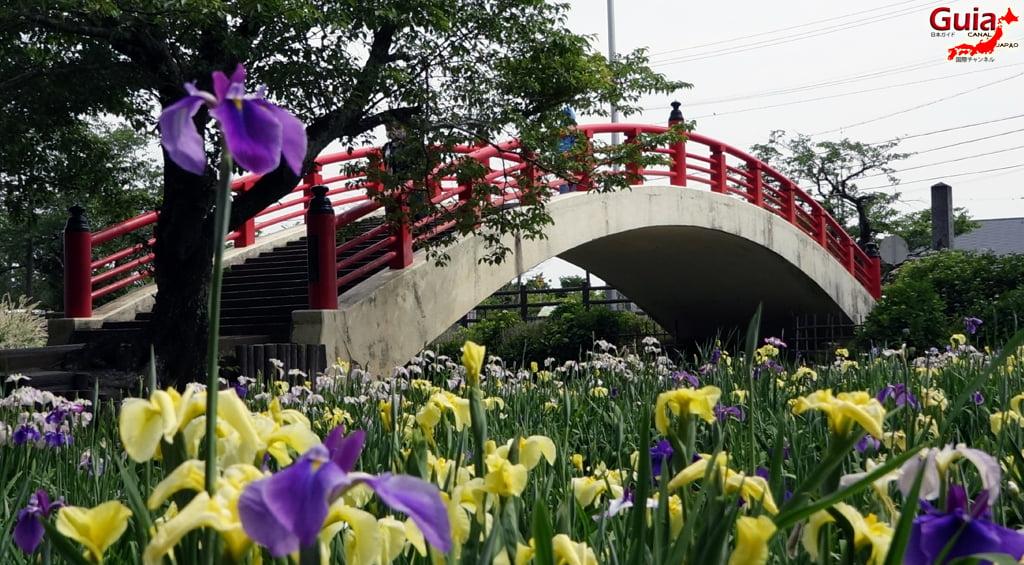 Цэцэрлэгийн Iris Kamo Hana-Shobu Toyohashi 41