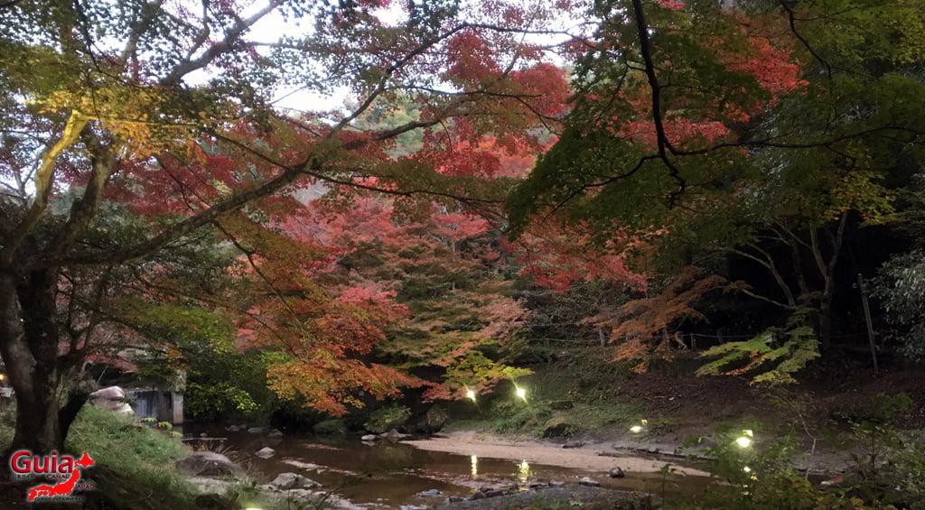 Seto - Festival das Folhas de Outono 4