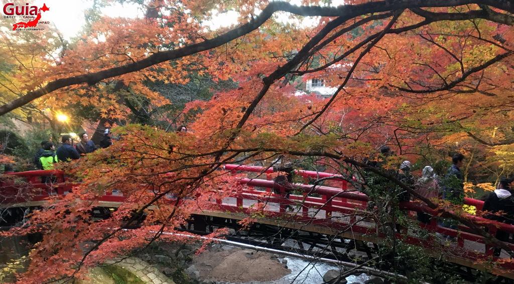 Seto - Festival das Folhas de Outono 7