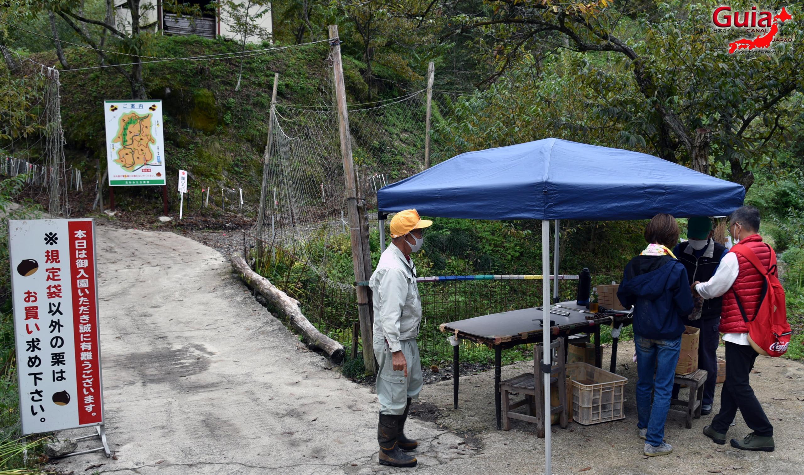Asukemitachikurien - Colhendo Castanhas 2