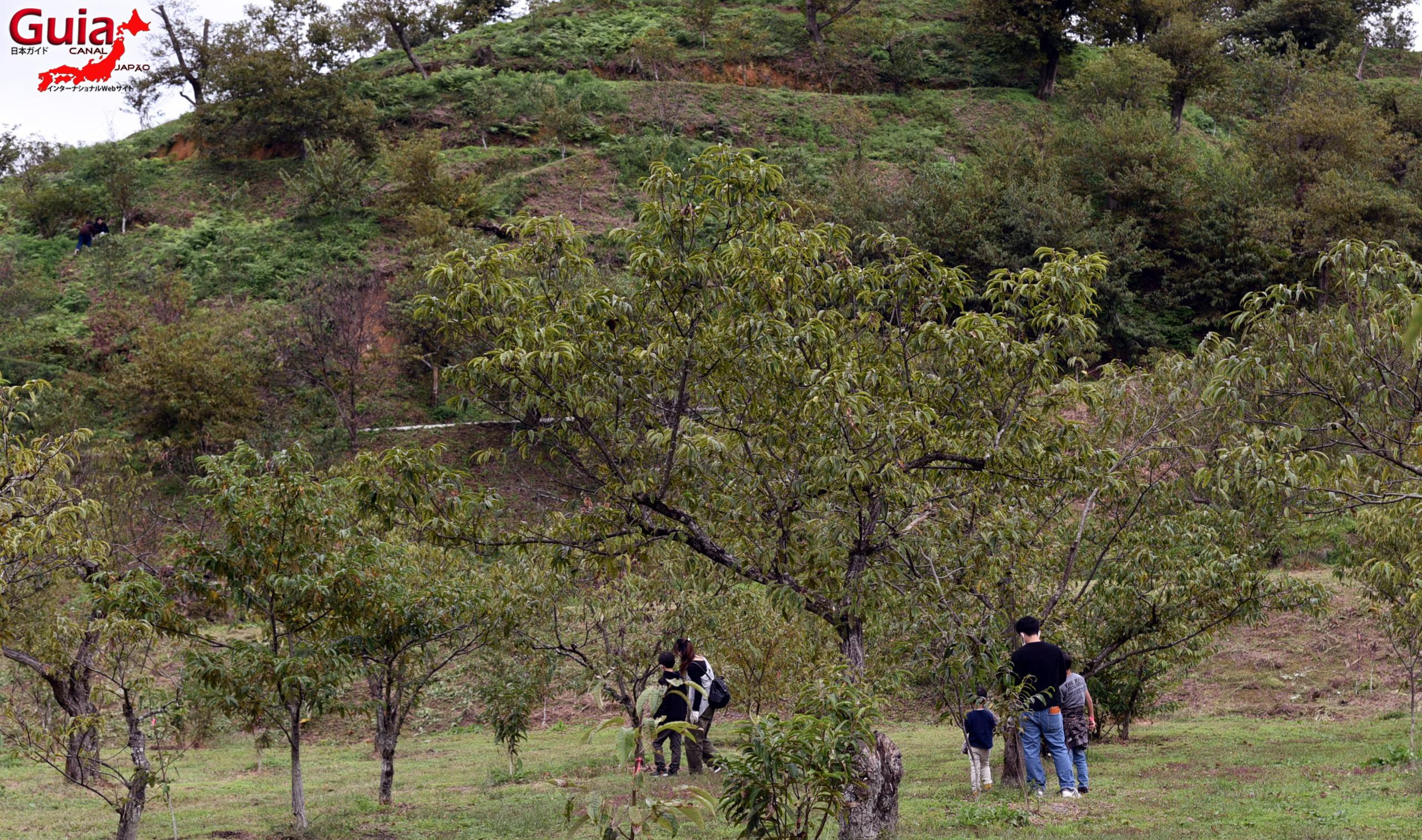 Asukemitachikurien - Colhendo Castanhas 26
