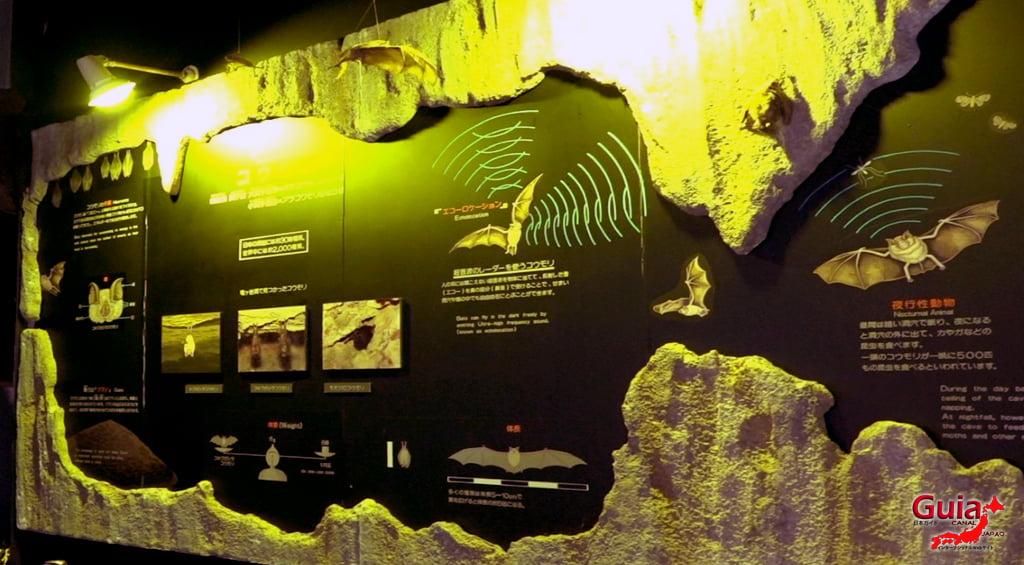 Caverna Ryugashido 37