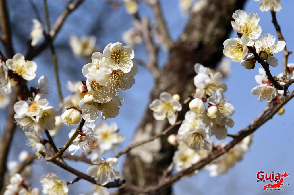 Iwazu Tenmangu Plums Festival - Okazaki 19